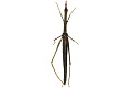 View Stick Grasshopper digital asset number 2