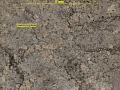 View Bacidia viridifarinosa Coppins & P. James digital asset number 1