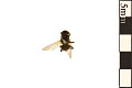 View House Fly digital asset number 1