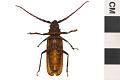 View Long-horn Beetle digital asset number 1