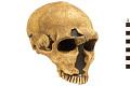 View La Ferrassie 1, Neanderthal Man, Fossil Hominid digital asset number 0