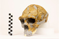 View Zhoukoudian, Early Human, Fossil Hominid digital asset number 12