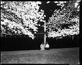 View Two girls view the cherry blossoms at night from the Tidal Basin [cellulose acetate photonegative] digital asset: untitled