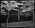 View View of the cherry blossoms at night [cellulose acetate photonegative] digital asset: untitled