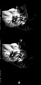 View Dr. Greene [cellulose acetate photonegative] digital asset: untitled
