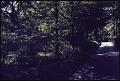 View Englewood -- Pam's Garden digital asset: Englewood -- Pam's Garden