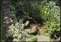 View Middletown -- Courtney-Pratt Garden digital asset: Middletown -- Courtney-Pratt Garden