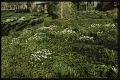 View Dayton -- Eleanore Shulman Garden digital asset: Dayton -- Eleanore Shulman Garden