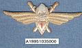 View Badge, Pilot 1st Class, Romanian Air Force digital asset number 1