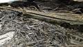 Lumber Remains