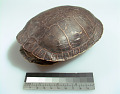 View Turtle shell digital asset number 0