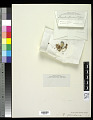 View Segestria floridana Tuck. digital asset number 1