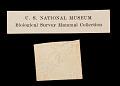 View Urocitellus elegans nevadensis digital asset number 1
