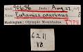 View Tamias amoenus caurinus digital asset number 0