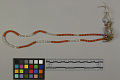View Glass Bead Necklace digital asset number 2