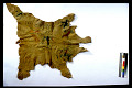 View Buffalo Calf Skin Robe Ornamented digital asset number 2
