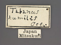 View Tabanus humilis Coquillett, 1899 digital asset number 2