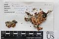 View Parmelia crambidiocarpa Zahlbr. digital asset number 1