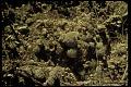 View Strombocactus disciformis digital asset number 0