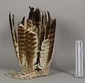 View Feather Headdress digital asset number 2