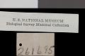 View Glaucomys volans herreranus Goldman, 1936 digital asset number 1