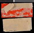 View Petaurista petaurista nigrescens Medway, 1965 digital asset number 1
