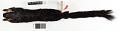 View Ratufa bicolor melanopepla digital asset number 4