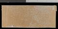 View Sciurus aureogaster nigrescens digital asset number 2