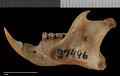 View Sciurus yucatanensis yucatanensis digital asset number 3