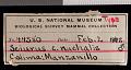 View Sciurus colliaei nuchalis Nelson, 1899 digital asset number 0