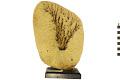 View Commercial Sponge digital asset number 2