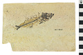 View Fossil Perch-like Fish digital asset number 0