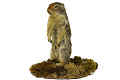 View Columbian Ground Squirrel digital asset number 0