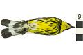View Magnolia Warbler, Magnolia Warbler digital asset number 2