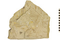 View Fossil Plant digital asset number 1