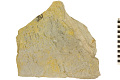 View Fossil Plant digital asset number 2