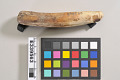 View Ivory Harpoon-Foreshaft digital asset number 9