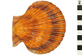 View Noble Scallop, Noble Scallop digital asset number 7