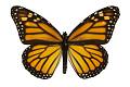 View Monarch digital asset number 2