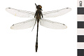 View Illinois River Cruiser, Dragonfly digital asset number 1
