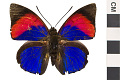 View Leafwing Butterfly digital asset number 0