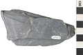 View Metamorphic Rock Phyllite digital asset number 3