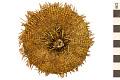 View Green Sea Urchin digital asset number 0