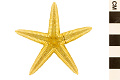 View Two-spined Starfish digital asset number 1