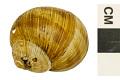 View Apple Snail digital asset number 1