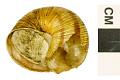 View Apple Snail digital asset number 0