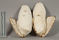 View Moccasins Pair, Decorated digital asset number 1
