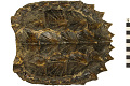 View Alligator Snapping Turtle, Alligator Snapping Turtle digital asset number 0