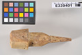 View Ivory Harpoon-Foreshaft digital asset number 6