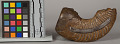 View Pipebowl W/ Human Face Carved On Scaphite Fossil Body digital asset number 5